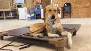 Calming Effect Of Place Command ǀ Redmark Kennels ǀ Austin Dog Training