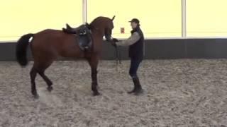 видео уроки выездка лошади. Разминка в руках.
