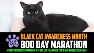 BOO DAY Marathon LIVE Stream 🔴 BLACK CAT Awareness Month - Watch Boo Transform Before Your Eyes!