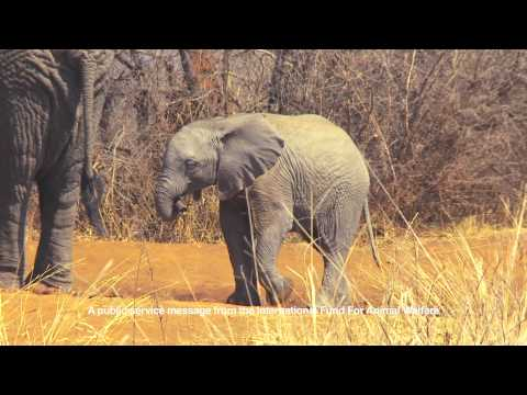 PROTECT Elephants - IFAW PSA 2014 (30 sec)