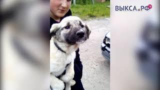Выкса.РФ: Пять причин взять собаку из приюта