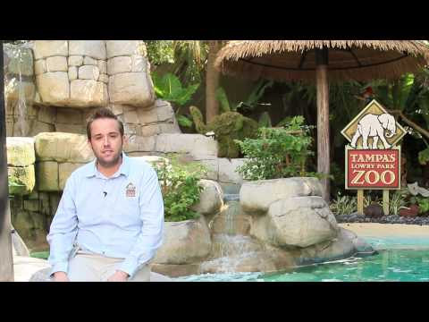 Marketing Solutions - Lowry Park Zoo | Tampa Bay Times Get 50,000 FREE impressions on tampabay.com