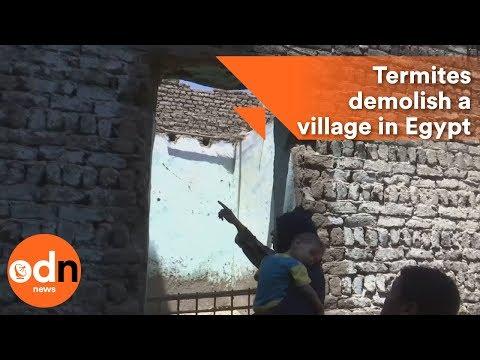 Termites demolish a village in Egypt