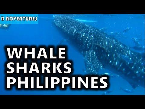Amazing Oslob Whale Sharks, Cebu Province, Philippines S3, Travel Vlog #94