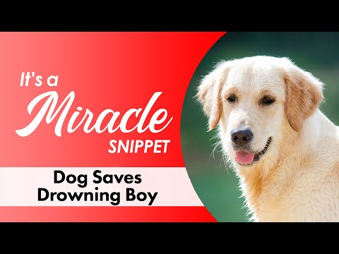 Dog Saves Drowning Boy - It's a Miracle