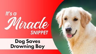 Dog Saves Drowning Boy - It