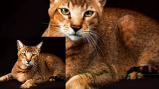The most beautiful and kind cats in the world