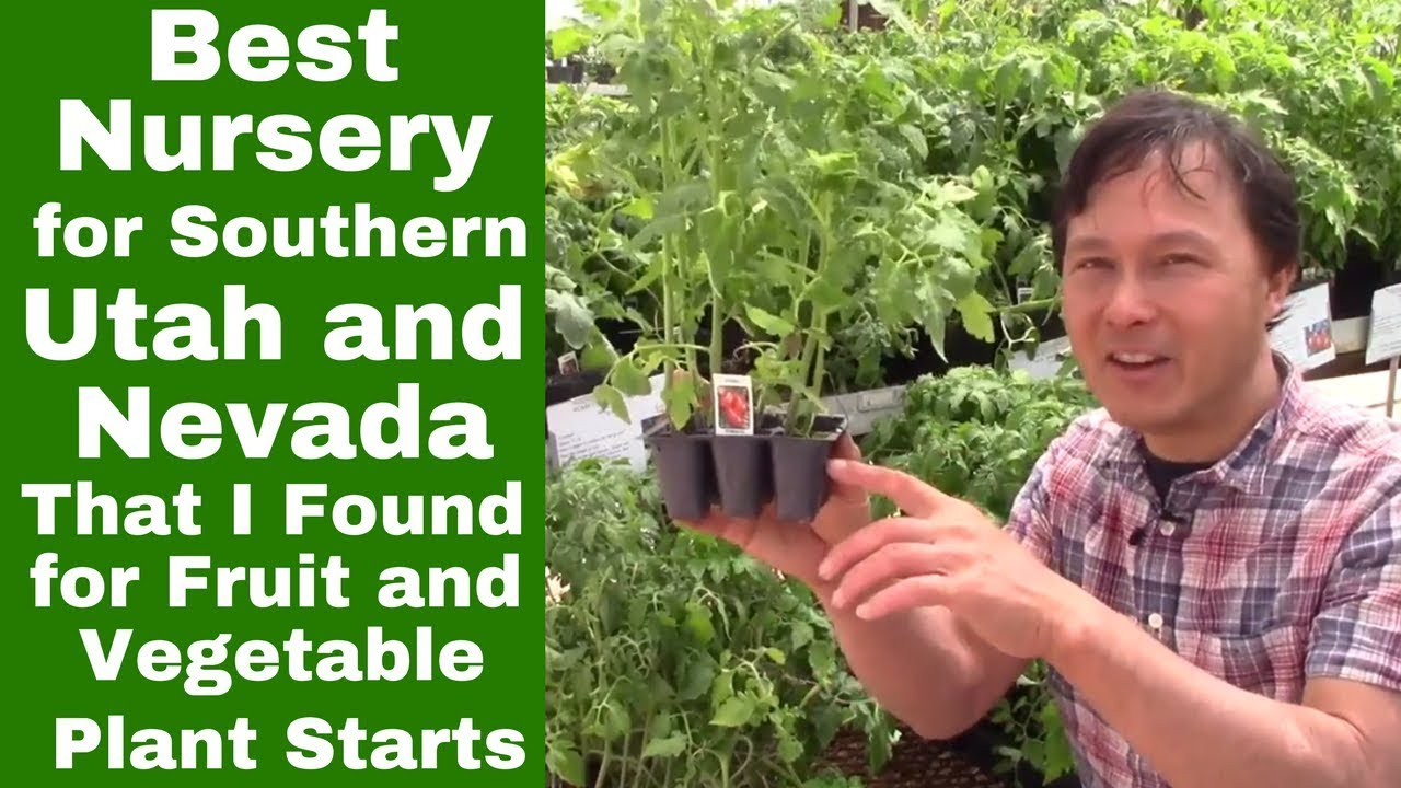Best Nursery For Southern Utah Nevada That I Found Vegetable Fruit Plant Starts