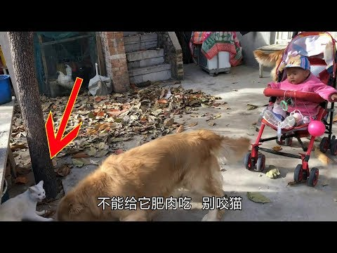 趙姐給壯壯一份肥肉,貓咪見了眼饞,剛湊近差點被壯壯咬到【我是趙姐】