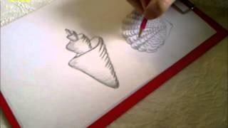 Zeichnen lernen für Anfänger. Verschiedene Muscheln zeichnen. Wassertiere zeichnen.