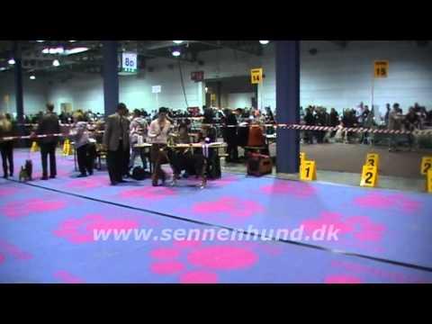 Luxembourg Expo 2011 Grosser Schweizer Sennenhund Bam Bam She Rocks van de Dovondolin