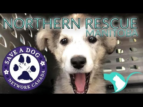 Save A Dog Canada | Northern Dog Rescue