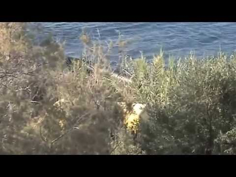 REFUGEES FROM SYRIA TO ISLAND OF LESVOS GREECE part1