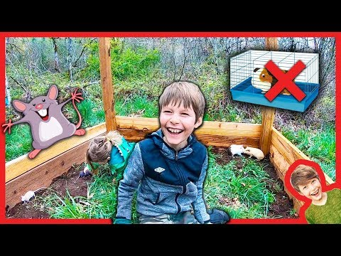 BUiLDING A GiANT FORT with PET RATS and GUINEAS!