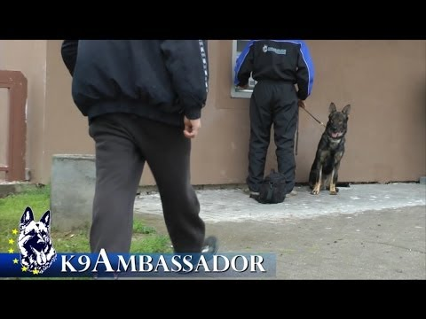 Fully Trained Elite Protection Dog - Butler z Erisedu / K9 Ambassador