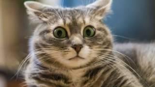Как отучить Кошку причинять Вред вашим вещам! Почему ее нельзя бить?