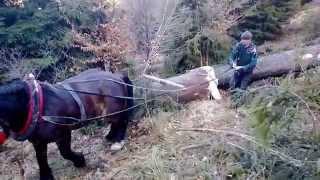 praca w lesie koniem