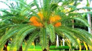 Te Digo Amor - Miguel Bosé