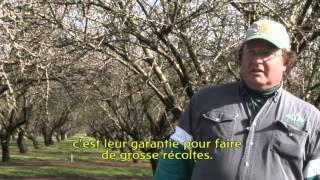 Abeilles   Du bétail à Miel dans les Enclos des Colonies Humaines Tome3 par Ananda Guillet et Domi