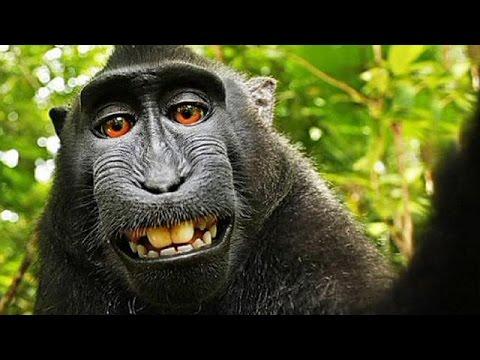 Affe Macht Selfie