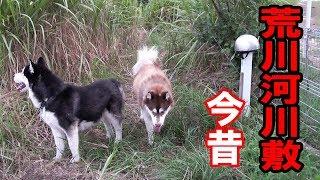 grandchild and German Shepherd dog husky dog 3年前迄はシベリアンハ...