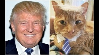 Trump's Biggest Fans Think He Saved Kittens From A Hurricane