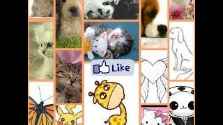 Милые картинки животных.💜✔