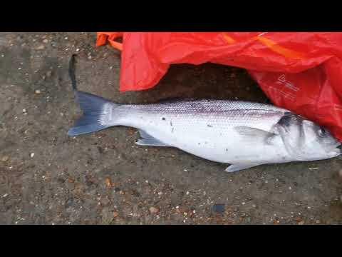 Bass Fishing Isle Of Grain - Last Trip For 2019