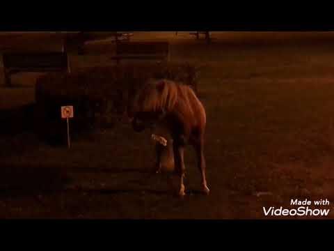 Rescatan a un poni en Lugo