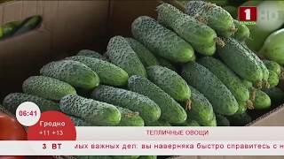 Тепличные овощи. Эфир 03.03.2020