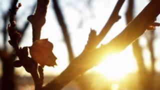 Потап и Настя Каменских - Чумачечая весна (римейк клип)