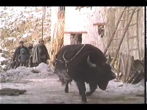 le-livre-des-morts-tibétain---la-grande-libration-bardo-thdol-༢