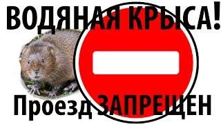 ВНИМАНИЕ НАШЕСТВИЕ Водяной крысы