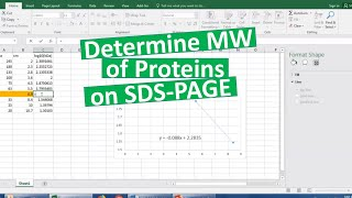 Determining MW of proteins on SDS-PAGE
