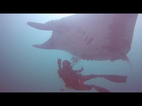Video Of The Week | Manta Ray Rescue