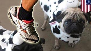 Animal Cruelty? Jogger Kills Pug With A Swift Kick To The Head In San Francisco Park