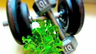 Oxidativní stres ze cvičení a potočnice lékařská