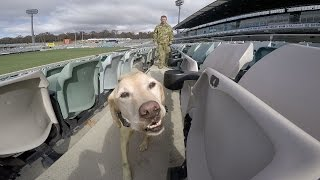 Explosive Detector Dogs Exercise