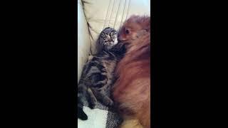 Крепкая дружба кошки и собаки.