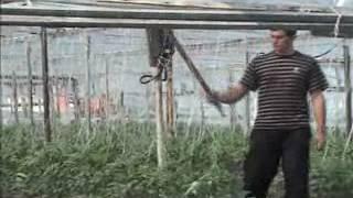 механическое опыление томатов(Подробнее читайте на сайте:http://teplichniki.ru/vse-ob-opylenii-ogurca-tomata-chast-5/ Подписывайтесь на наш канал - http://www.youtube.com/user/tep..., 2017-01-06T22:12:53.000Z)