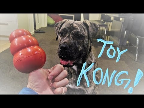 How To Use a KONG Toy (Help Eliminate  Dog's Behavior Issues)