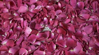 Closeup shot of Indian bride's engagement ring with rose petals - wedding concept