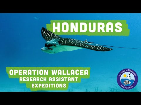 Operation Wallacea - Honduras Research Assistant
