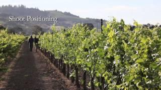 Seasons of the Vineyard: Summer (A Jordan Winery Video Series)
