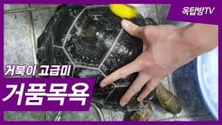 (웃김)대한민국 최초 육지거북 거품 목욕[옥탑방거북이]