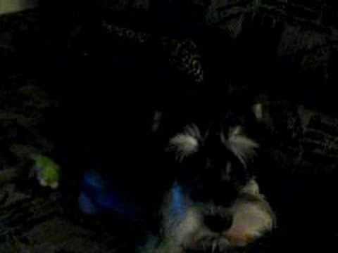 My Dog Mazzy