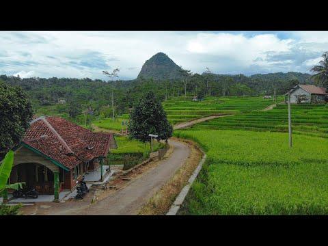 Musim Panen Padi Di Kampung Ada Gadis Desanya | Suasana Pedesaan Jawa Barat, Garut Selatan Singajaya