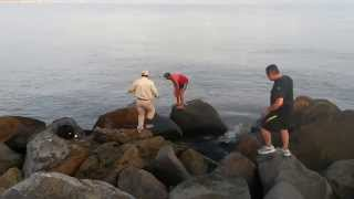 barrucuda 15 kg  tecnica artesanal coatzacoalcos (pesca a mano)