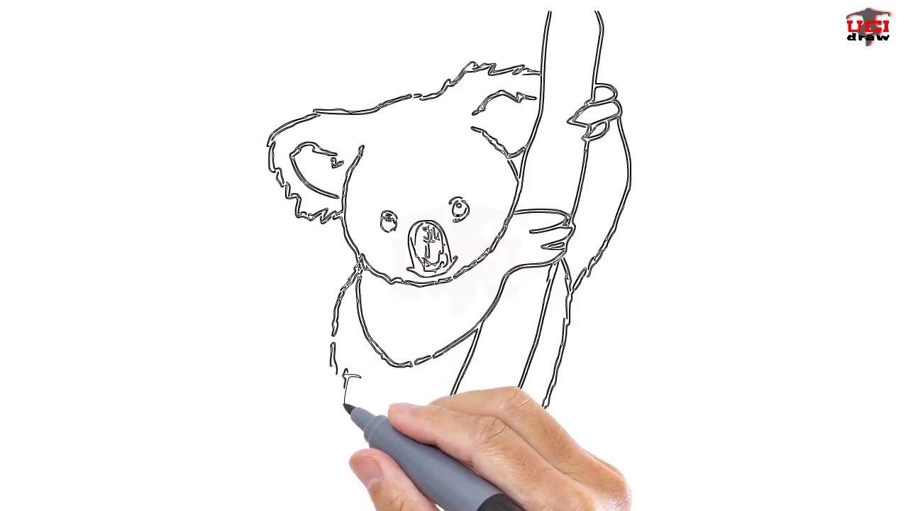 Uncategorized How To Draw A Koala Bear how to draw a koala easy step by drawing tutorials for kids ucidraw