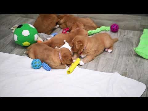 Pink's Puppies Present: Toy Time is Learning Time
